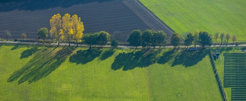 Aerial image Schermbeck - Row of trees in a field edge in Schermbeck in the state North Rhine-Westphalia, Germany