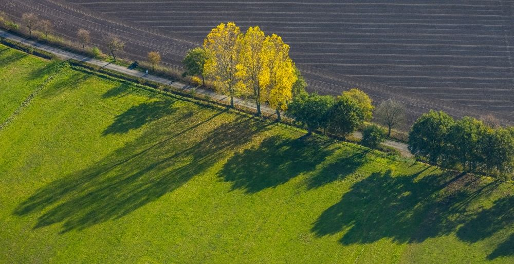 Aerial photograph Schermbeck - Row of trees in a field edge in Schermbeck in the state North Rhine-Westphalia, Germany