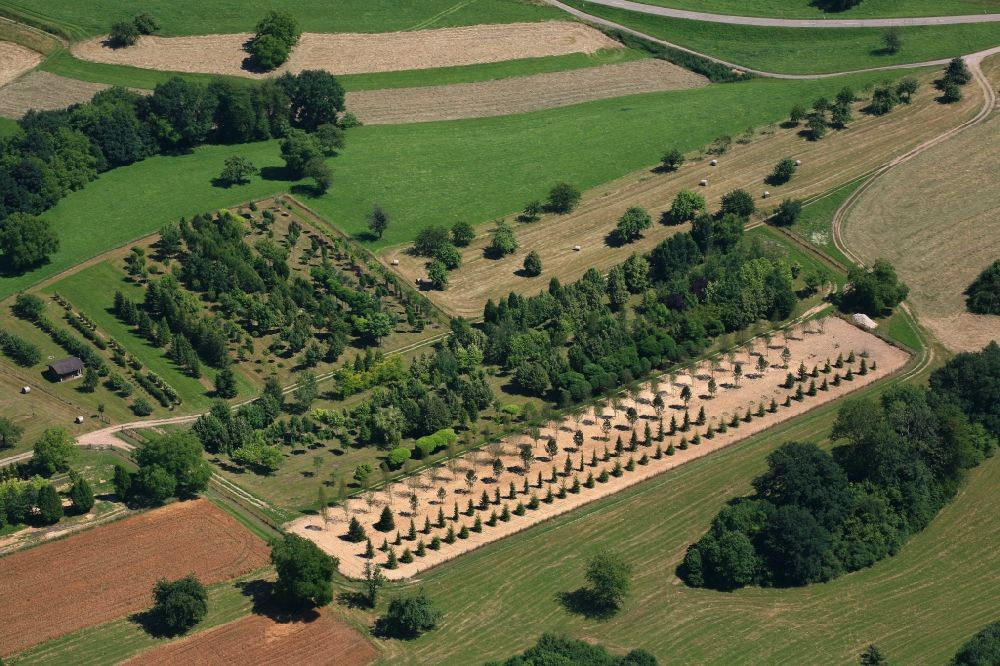 Wehr from the bird's eye view: Row of trees on fields of a tree nursery in the Black Forest in Wehr in the state Baden-Wurttemberg, Germany