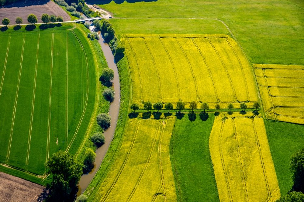 Aerial photograph Gelmer - Field landscape yellow flowering rapeseed flowers in Gelmer in the state North Rhine-Westphalia, Germany
