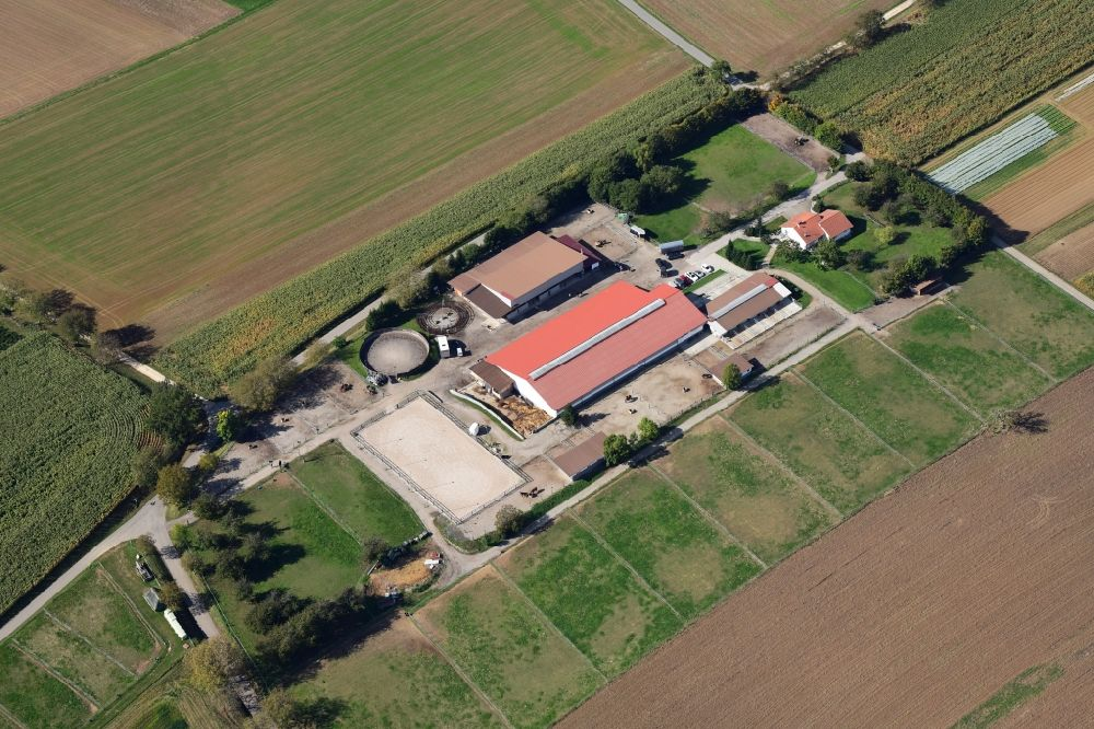 Aerial image Efringen-Kirchen - Homestead of a farm and horse stable in Efringen-Kirchen in the state Baden-Wurttemberg, Germany