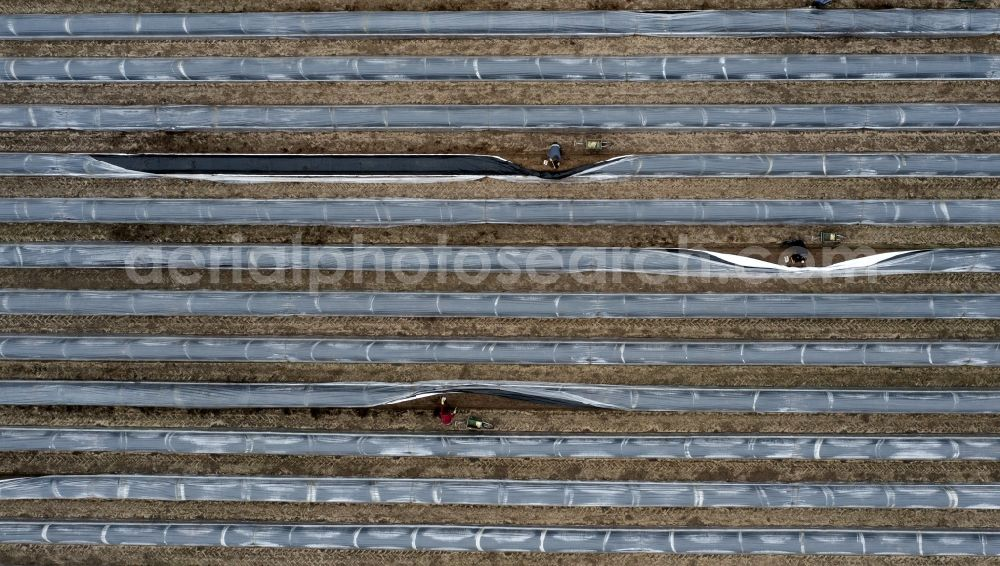 Luckenwalde from above - Rows with asparagus growing on field surfaces in Luckenwalde in the state Brandenburg, Germany