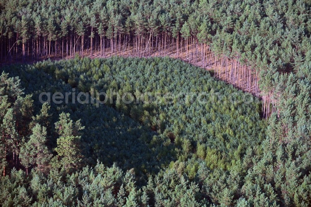 Bülstringen from above - Renaturation through afforestation of young trees in the forest area in Buelstringen in the state Saxony-Anhalt, Germany