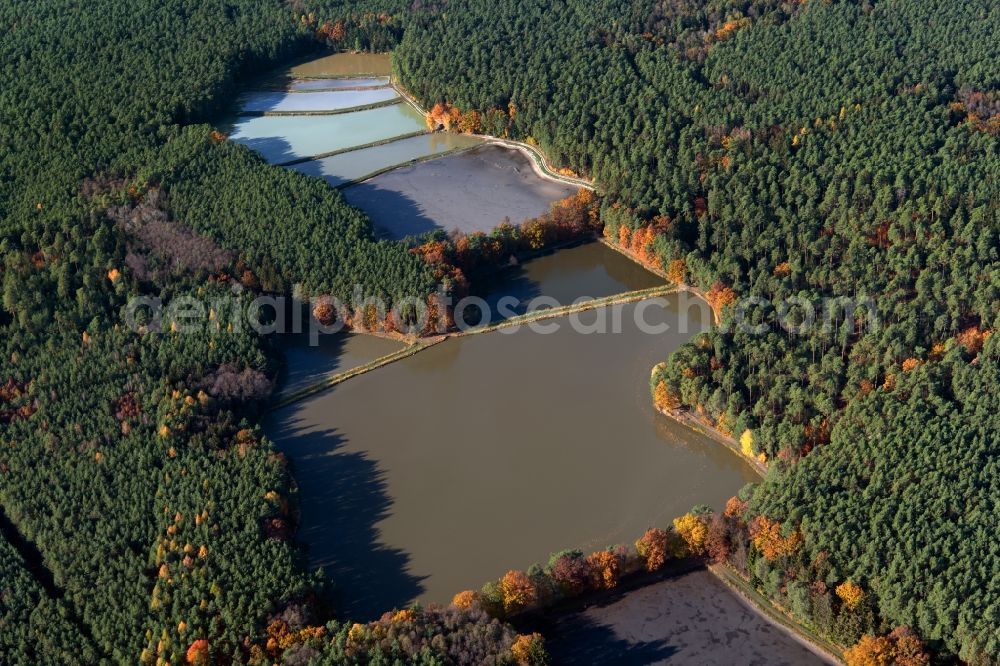 Aerial image Schwarzenbach - Shore areas of the ponds for fish farming Limbacher Weiher in a forest area in Schwarzenbach in the state Bavaria, Germany