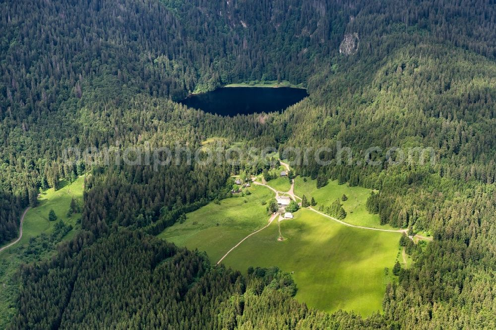 Hinterzarten from above - Forests on the shores of Lake Feldsee in Hinterzarten in the state Baden-Wuerttemberg