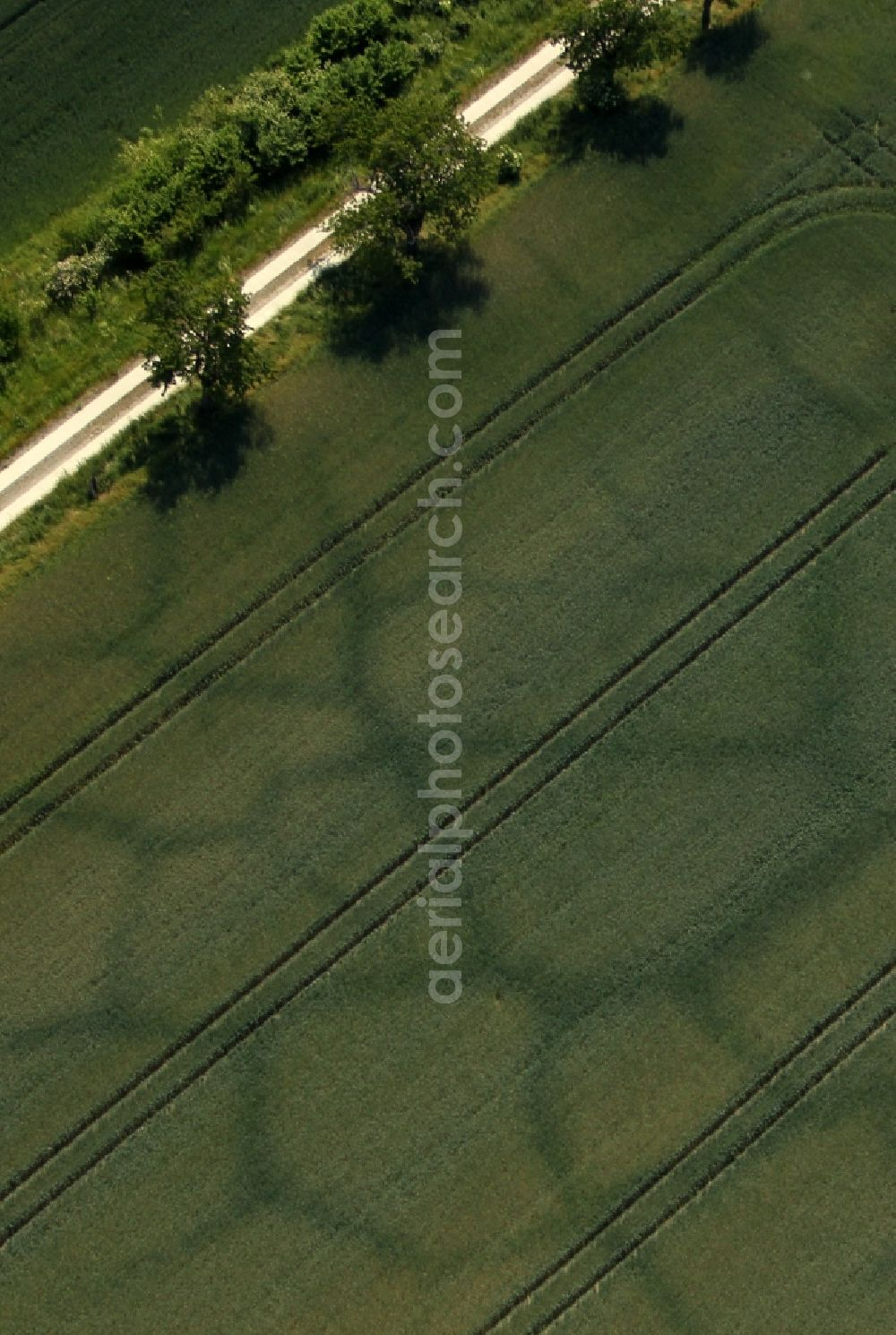 Aerial photograph Karsdorf - Vegetation structures on agricultural fields characterized by subterranean waterways in Karsdorf in the state Saxony-Anhalt, Germany