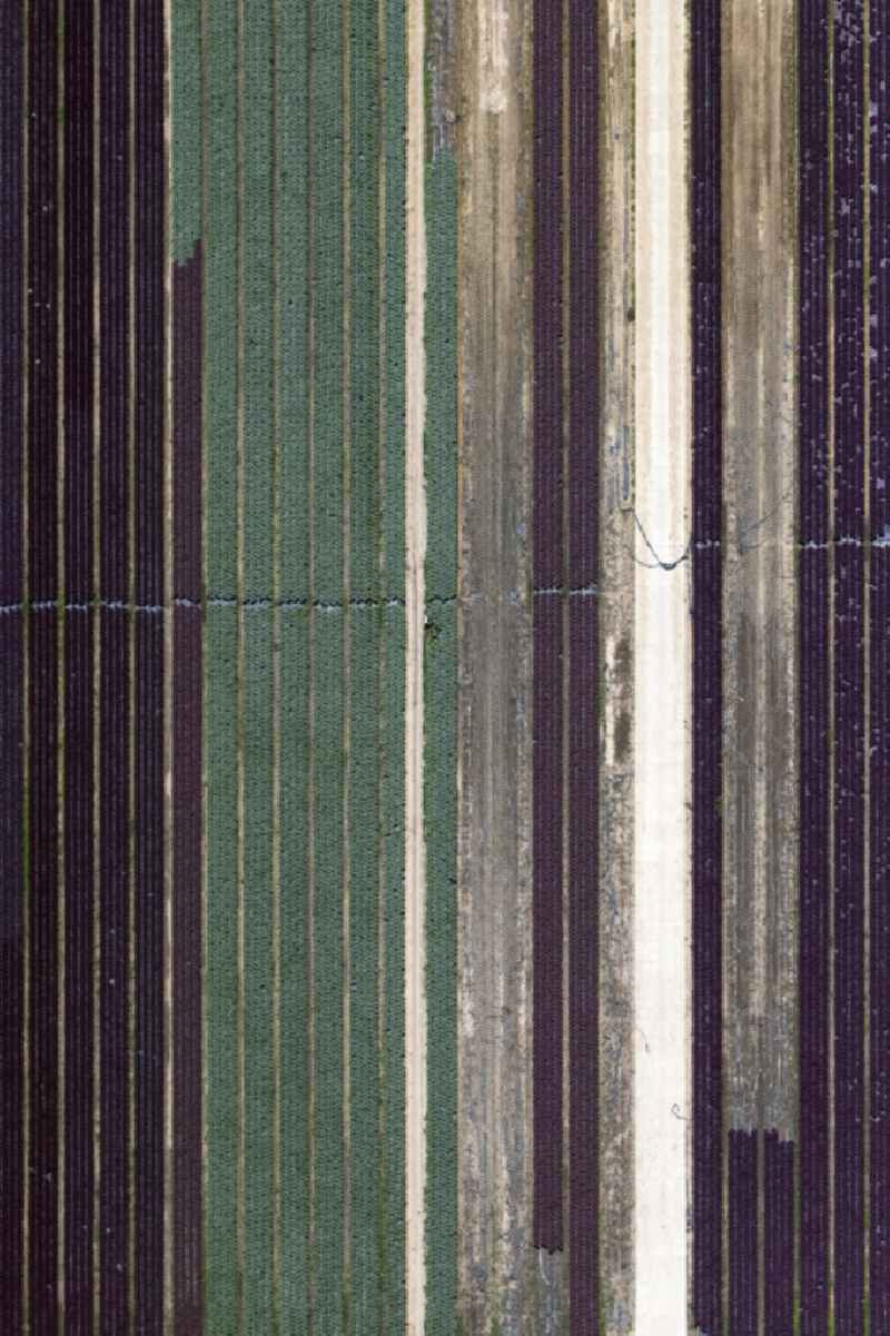 Structures on agricultural fields in Buerstadt in the state Hesse, Germany