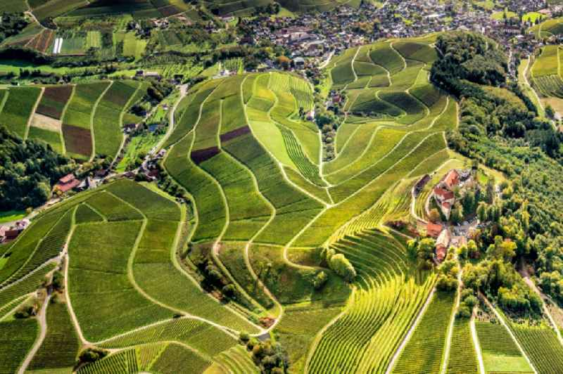 Fields of wine cultivation landscape in Durbach in the state Baden-Wurttemberg, Germany.