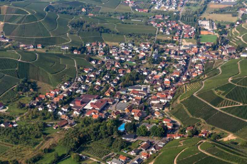 Fields of wine cultivation landscape in Durbach in the state Baden-Wurttemberg, Germany