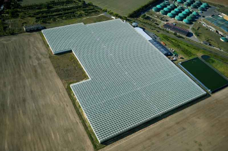 Glass roof surfaces in the greenhouse for vegetable growing ranks in Felgentreu in the state Brandenburg, Germany