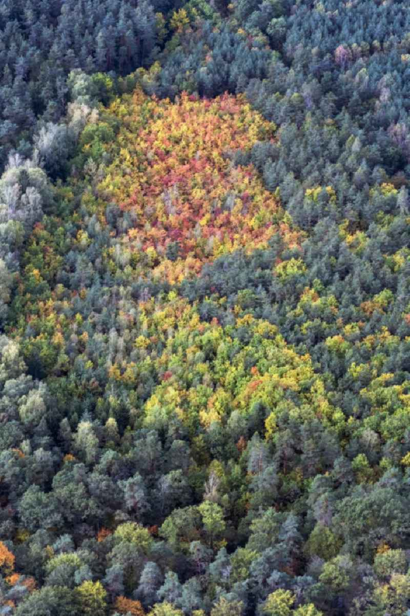 Autumnal discolored vegetation view treetops in a forest area in Herbst with bunten Farben in Fischbach in the state Bavaria, Germany