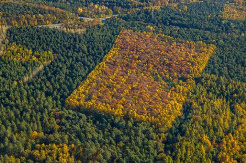 Autumnal discolored vegetation view geometric shapes, structures and outlines through afforestation and reforestation in a deciduous and mixed forest forest area in Haltern am See in the state North Rhine-Westphalia, Germany