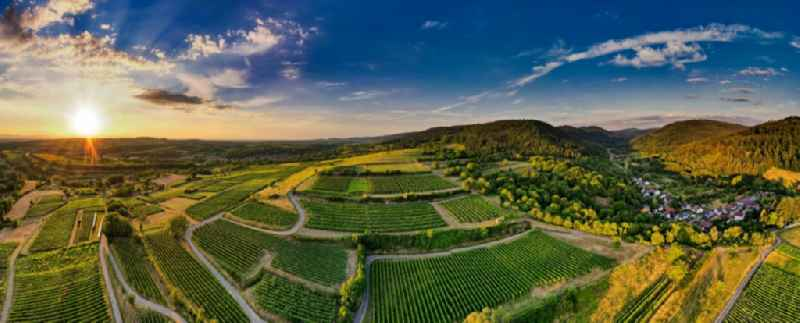Fields of wine cultivation landscape in Herbolzheim in the state Baden-Wuerttemberg, Germany