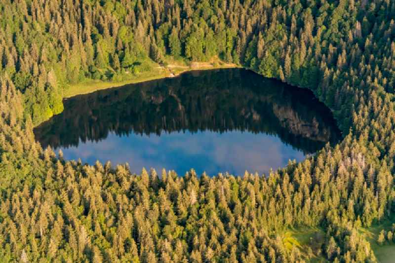 Forests on the shores of Lake Feldsee on Feldberg in Hinterzarten in the state Baden-Wurttemberg, Germany