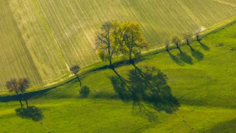Row of trees on fields of in Krudenburg in the state North Rhine-Westphalia, Germany