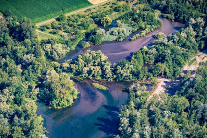 Riparian zones on the course of the river Altrhein in Meissenheim in the state Baden-Wuerttemberg, Germany
