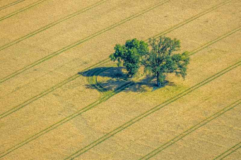 Island of trees in a field in Norddinker in the state North Rhine-Westphalia, Germany
