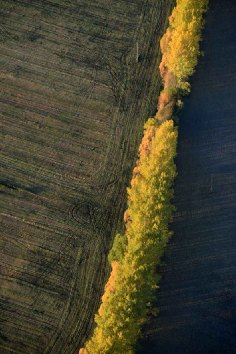 Autumnal yellow- colored row of trees in a field edge in Nuthe-Urstromtal in the state Brandenburg