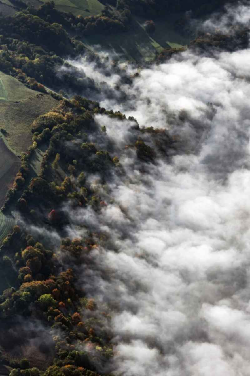 Treetops in a forest area bei aufsteigendem Nebel and Wolken in Pentling in the state Bavaria, Germany