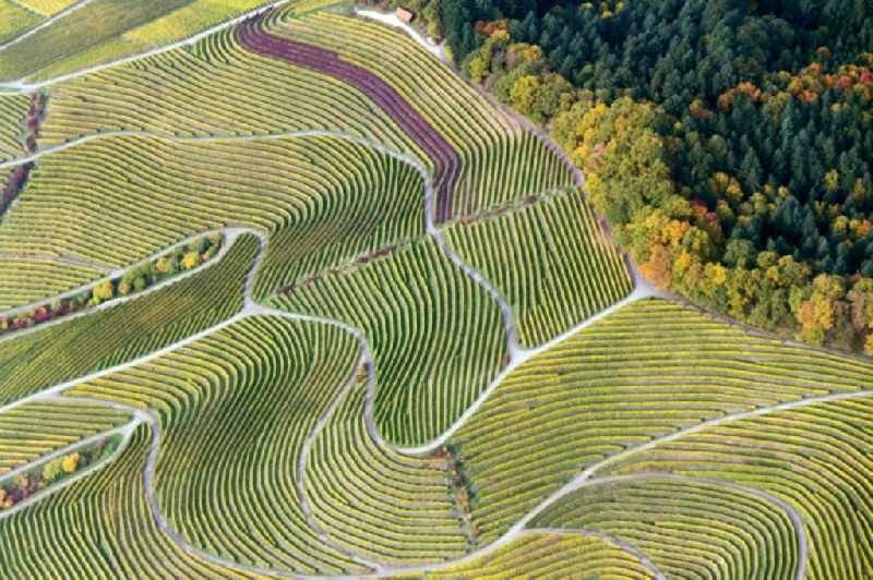 Fields of wine cultivation landscape in Sasbachwalden in the state Baden-Wuerttemberg
