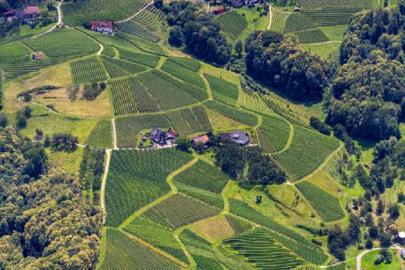 Village - view on the edge of vineyards and wineries in Sasbachwalden in the state Baden-Wuerttemberg, Germany