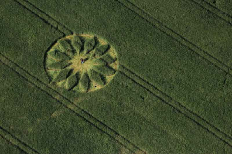Grain field structures of a grain circle in the district Grossziethen in Schoenefeld in the state Brandenburg.