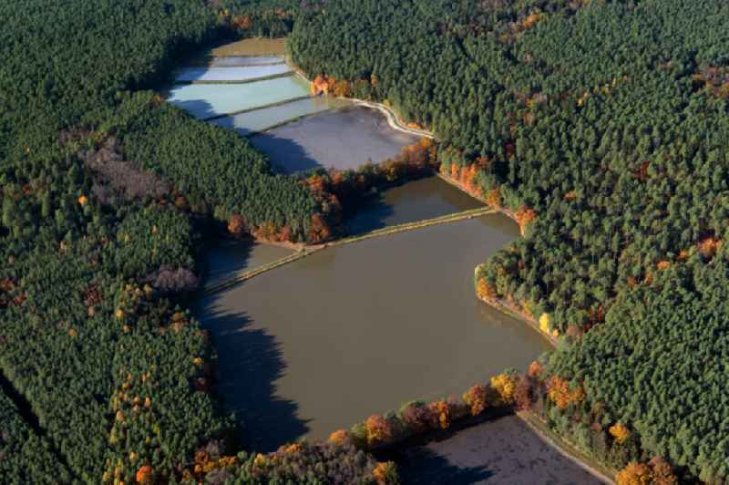 Shore areas of the ponds for fish farming ' Limbacher Weiher ' in a forest area in Schwarzenbach in the state Bavaria, Germany