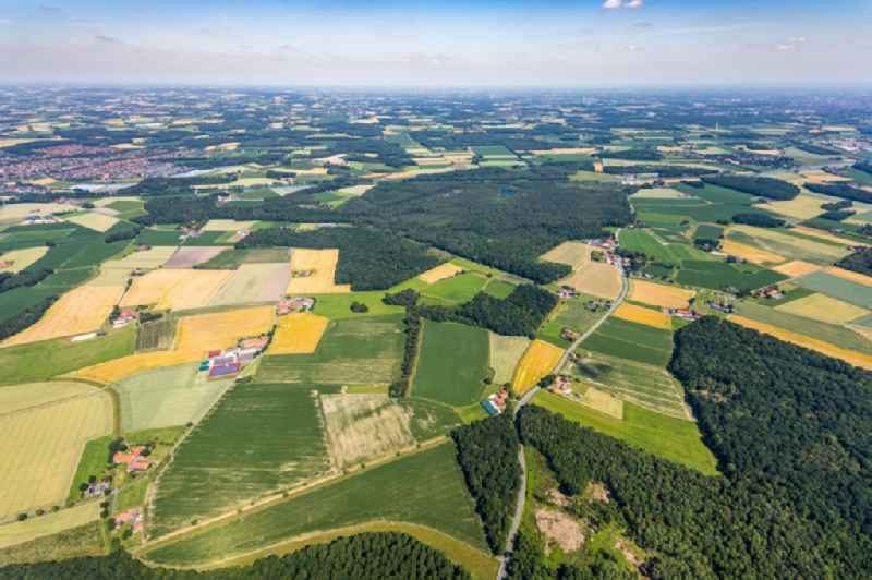 Forest areas in ' Venner Moor ' in Senden in the state North Rhine-Westphalia, Germany