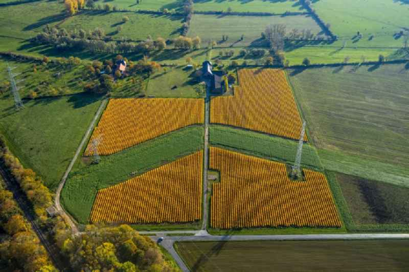 Structures on agricultural fields for growing maize in Spellen in the state North Rhine-Westphalia, Germany