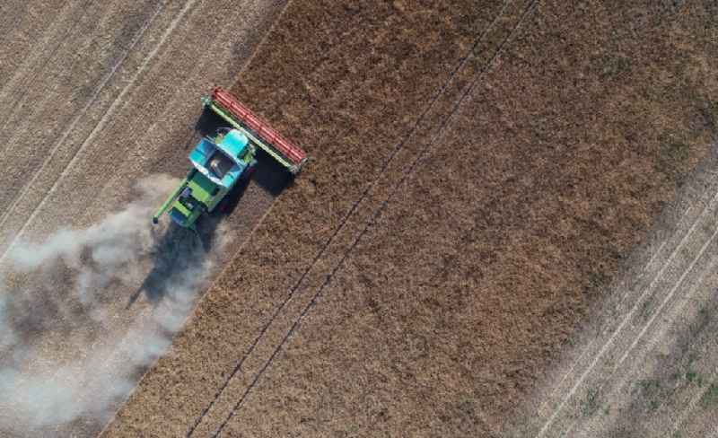 Harvest use of heavy agricultural machinery - combine harvesters and harvesting vehicles on agricultural fields in Treplin in the state Brandenburg, Germany