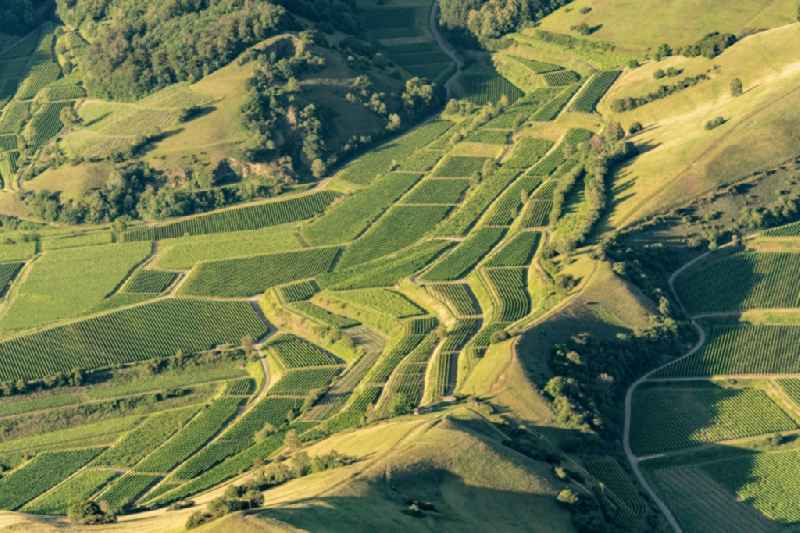 Fields of wine cultivation landscape in Vogtsburg im Kaiserstuhl in the state Baden-Wuerttemberg, Germany