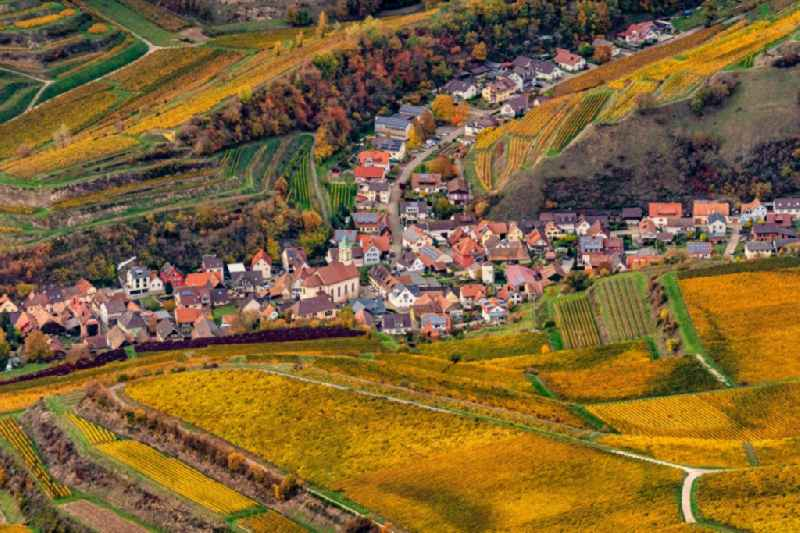 Autumnal discolored vegetation view fields of wine cultivation landscape in Vogtsburg im Kaiserstuhl in the state Baden-Wurttemberg, Germany