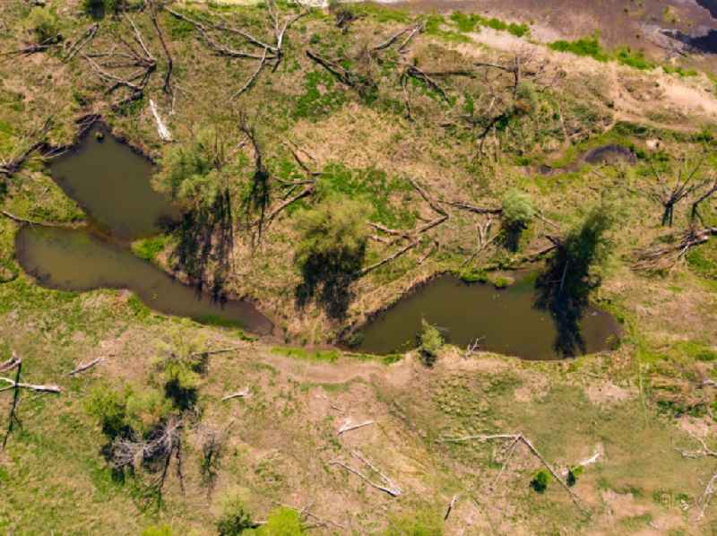 Vertical aerial view from the satellite perspective of the curved loop of the riparian zones on the course of the river Oder in Kuestriner Vorland in Lubuskie Lebus, Poland