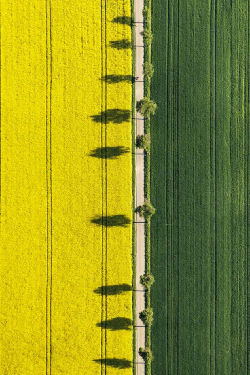 Vertical aerial view from the satellite perspective of the tree with shadow forming by light irradiation on a field in Monheim in the state Bavaria, Germany.
